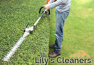 Trimming Hedges Wandsworth